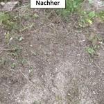 Stubbenfräse nachher